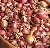 Egyptian Tree Onion - Bulbils