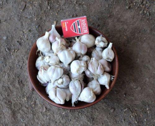 Garlic - Takahue Eating Grade 500g