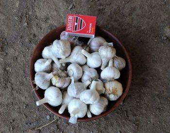 Garlic - Rocambole Eating Grade 200g