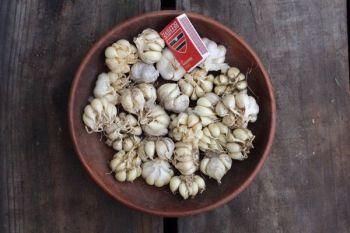 Garlic - Early Pearl 500g Eating Grade