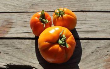 Tomato - Orange Crimea