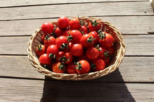 Tomato - Tommy Toe