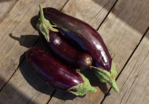 Eggplant Early Long Purple