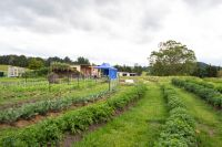 Workshop - Garden Design and Implementation