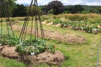 Workshop - Growing a Healthy Garden with Natural Fertilisers