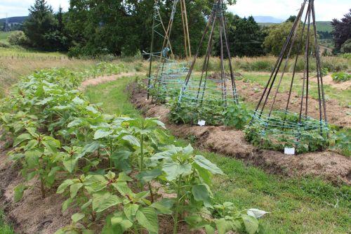Workshop - Design Your Dream Garden