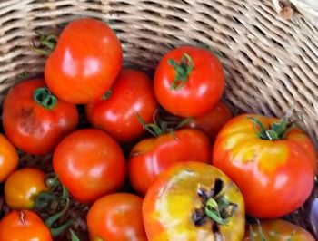 Tomato - Henry's Beefsteak