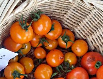 Tomato - Mini Orange
