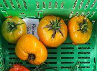 Tomato - Faribo Goldheart