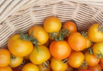 Tomato - Tangella