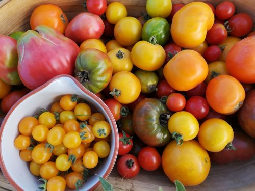 Tomato Dream Variety Mix Pack