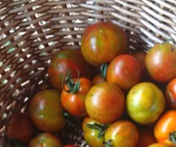 Tomato - Guernsey Island