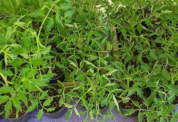 Pre - Order Seedlings