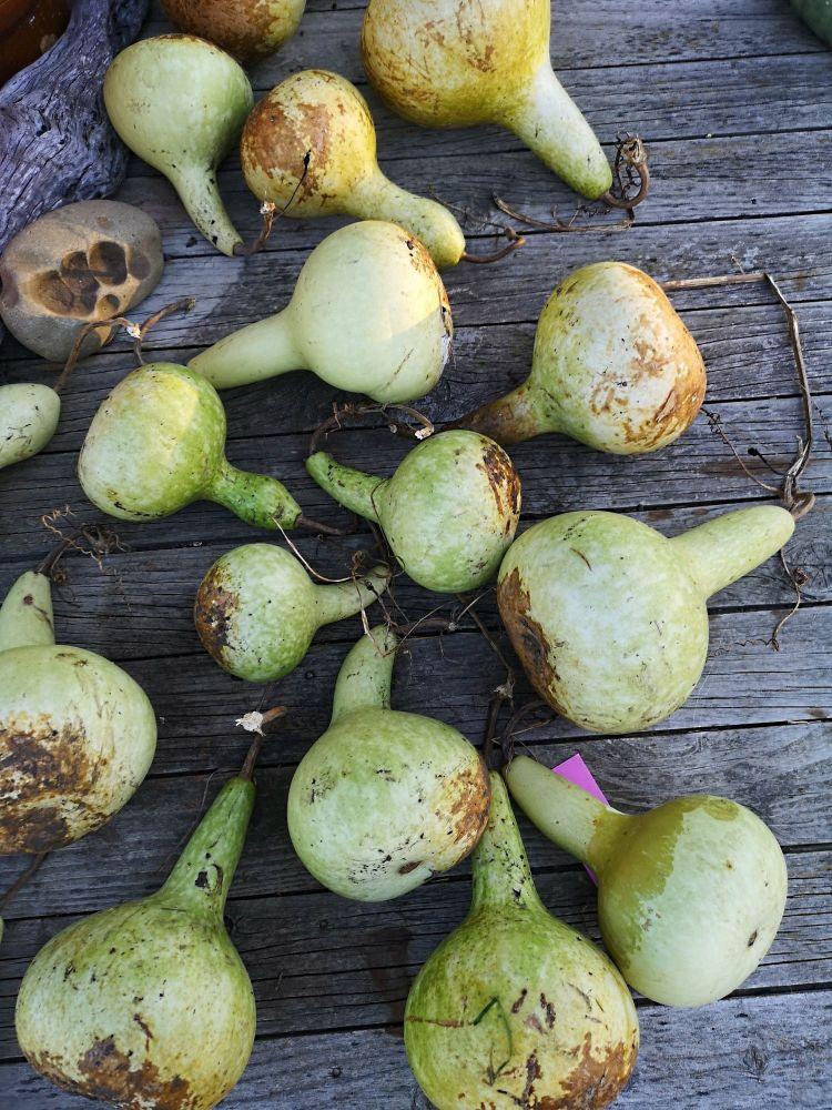 Gourd - Ruka