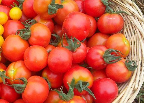 Tomato - Tommy Toe Seedling