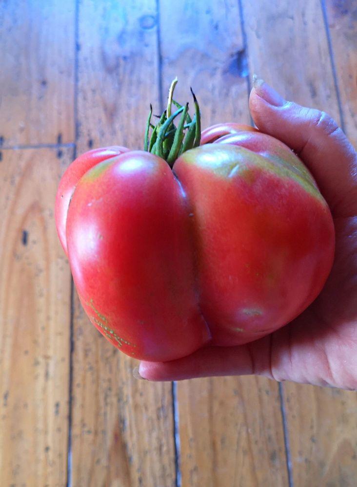 Tomato - Bulgarian Heart