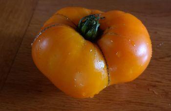 Tomato - Orange Beefsteak