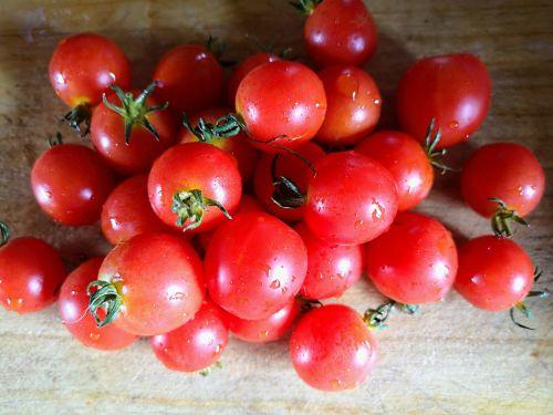 Tomato - Baxter's Bush