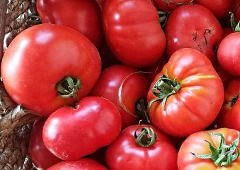 Tomato - Carlton Victory