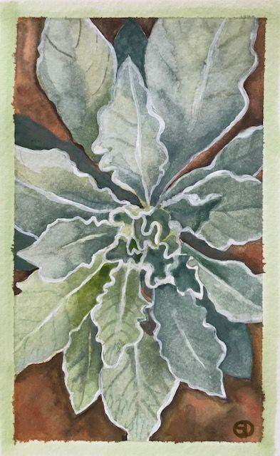 Seed Art Gift Card - Mullein Card