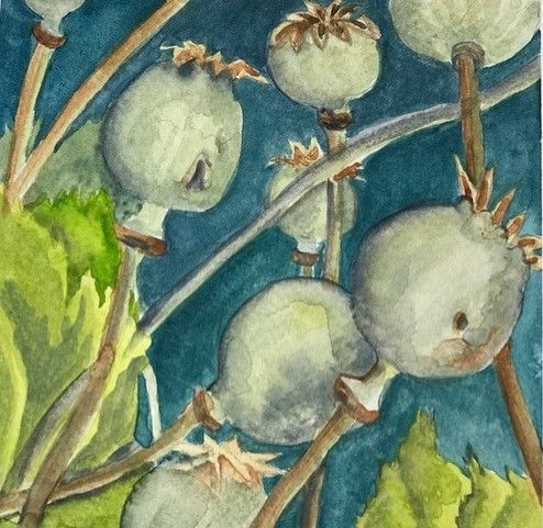 Seed Art Gift Card - Poppy Seed Heads Card