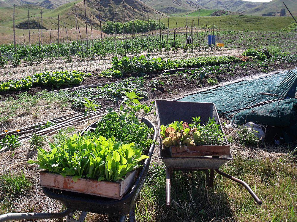Garden Combo Deals
