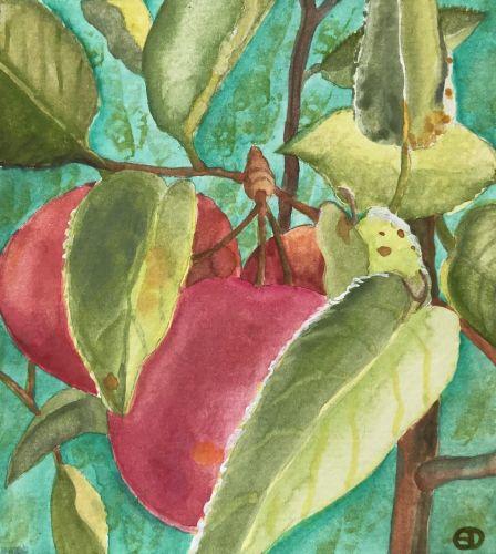 Seed Art Gift Card - Apple Card