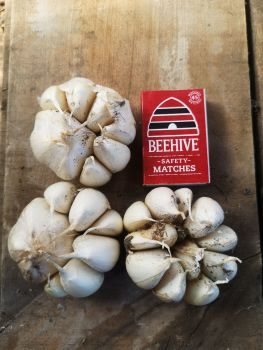 Garlic - Early Pearl Seed 1st Grade (1 Bulb)