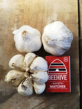 Garlic - Early Pearl Seed 2nd Grade (3 Bulb pack)
