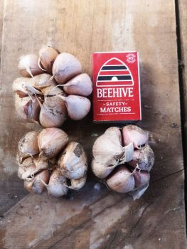 Garlic - Early Purple Seed 2nd Grade (3 Bulb pack)