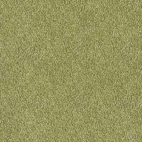 Foxtail Fern - Moss