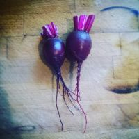 Beetroot 'Boltardy' Seeds