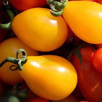 Tomato 'Yellow Pear' Seeds