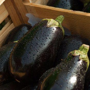 Aubergine 'Black Beauty' Seeds (Organic)