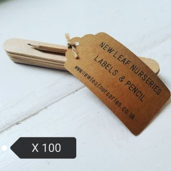 Wooden Labels and Pencil x 100