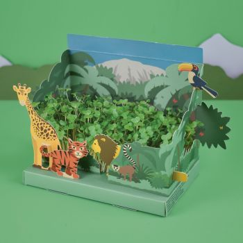 Grow Your Own Mini Jungle Garden