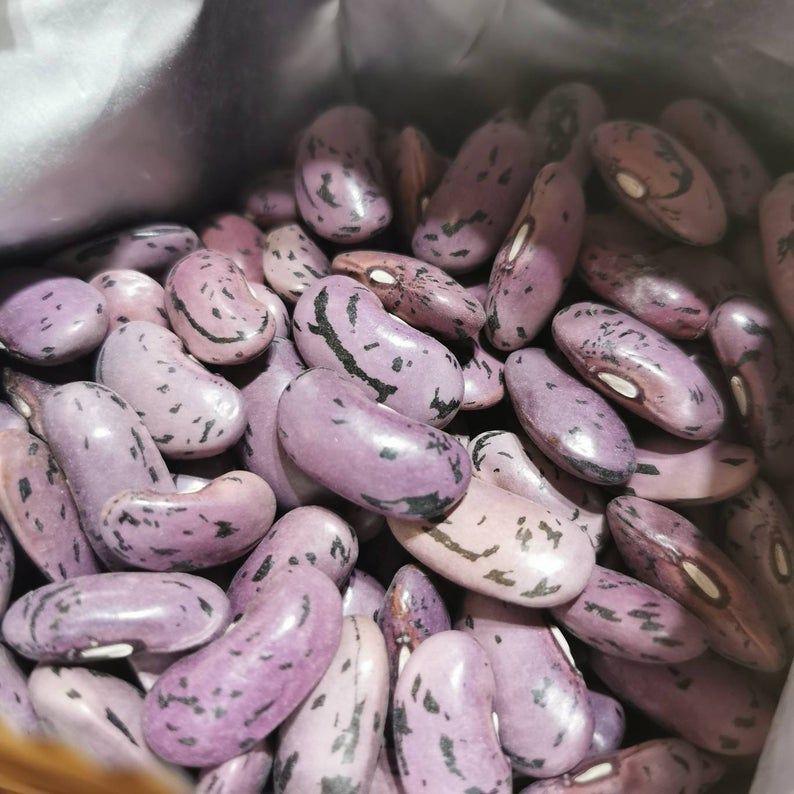 Runner Bean 'Enorma' Seeds
