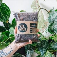 Alocasia Compost  by Soil Ninja