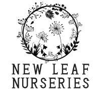 Courgette 'Nero di Milano' Seeds (Organic)