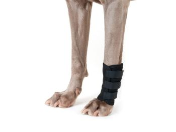 Back on Track® Canine Shin/Leg (Carpal) Wraps