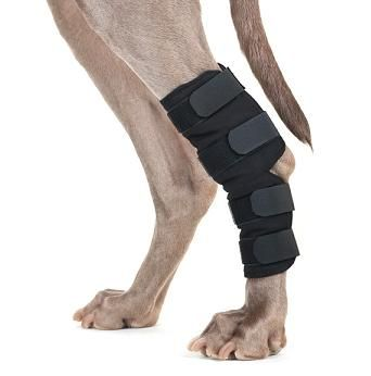 Back on Track® Hock/Ankle Wraps (Hock Brace)