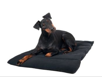 Back on Track® Dog/Pet Blanket