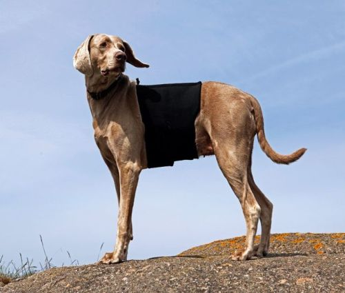 Back on Track® Dog Back Brace