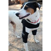 Ortocanis Canine Elbow Orthosis