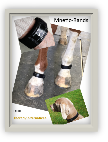 Mnetic-Band magnetised bands