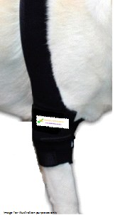 FirstCanine Orthopaedic Elbow Brace