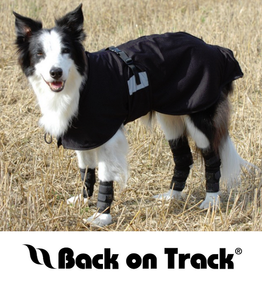 Back on Track® Canine Products