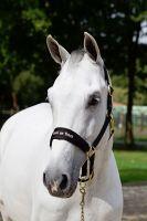 Back on Track® Equine Werano Halter