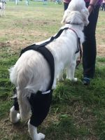 FirstCanine Dual Knee Brace