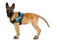 Julius K9 IDC® Powerharness